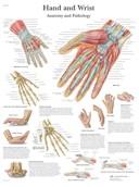 Anatomische Poster van de Hand & Pols