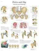 Anatomische Poster Heup & Bekken