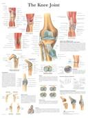 Anatomische Poster van de Knie