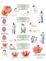 Anatomische Poster Geboorte